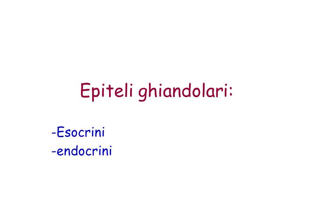 Epiteli ghiandolari: -Esocrini -endocrini