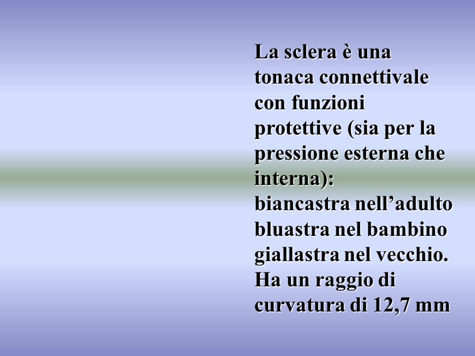 La sclera è una tonaca connettivale con funzioni protettive (sia per la pressione esterna che interna): biancastra nelladulto bluastra nel bambino gia