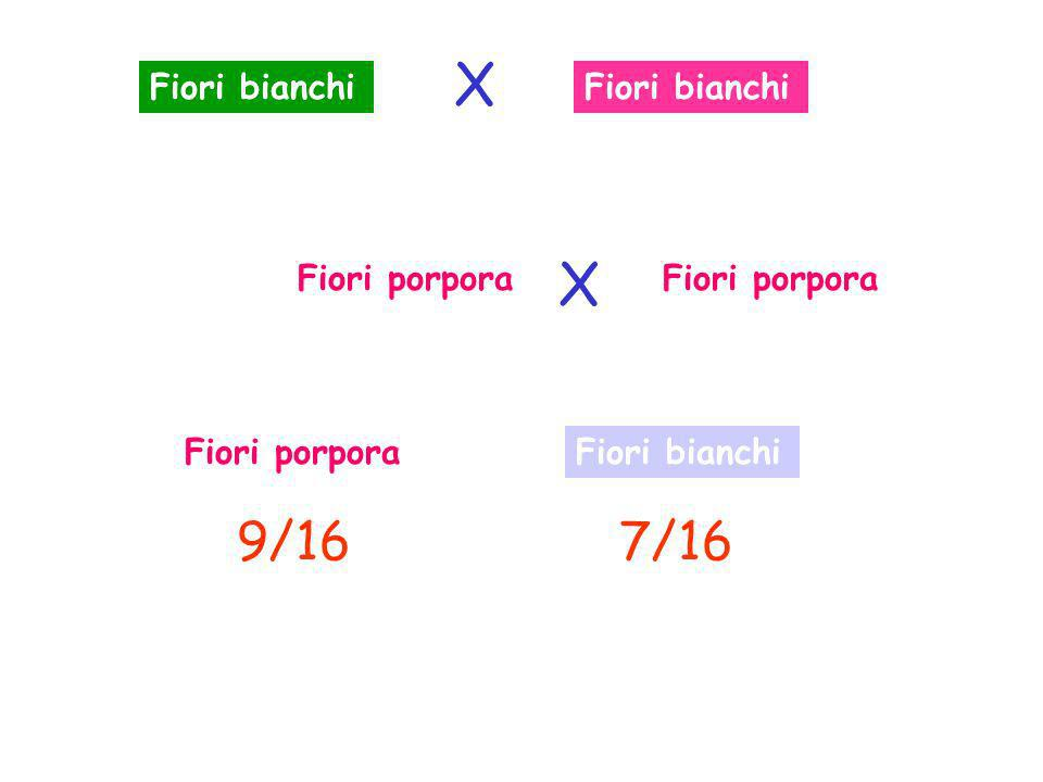 Fiori bianchi Fiori porpora Fiori bianchi 9/167/16 X X