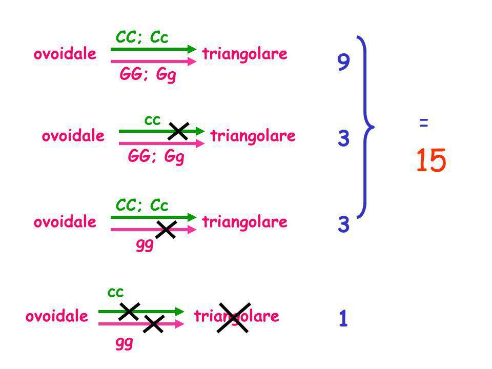 ovoidaletriangolare GG; Gg CC; Cc 1 3 3 9 ovoidaletriangolare gg cc ovoidaletriangolare GG; Gg cc ovoidaletriangolare gg CC; Cc 15 =