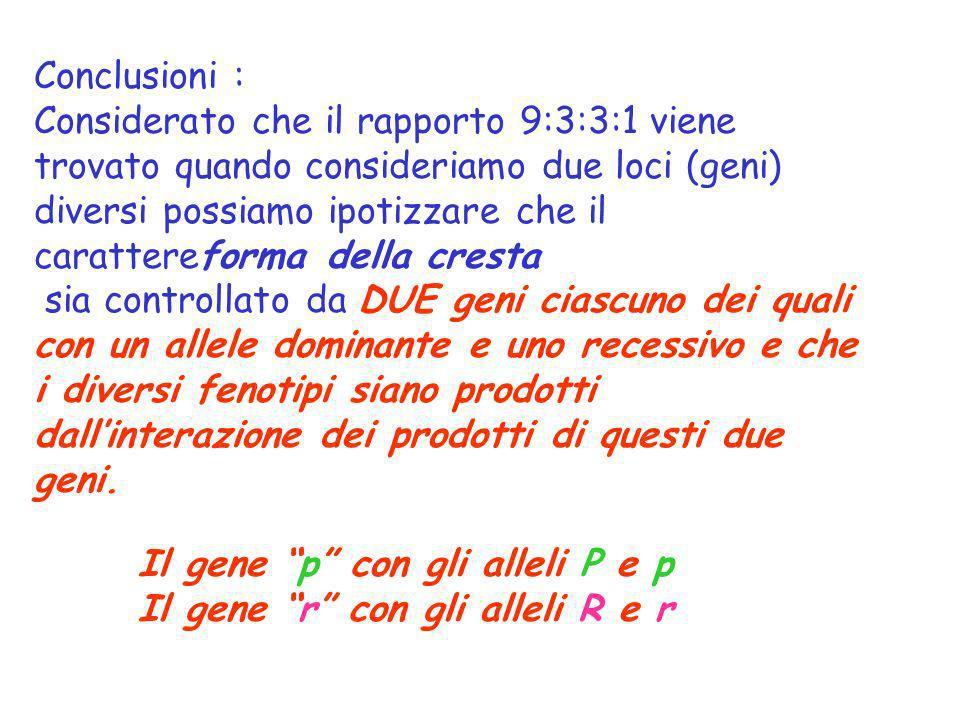 Conclusioni : Considerato che il rapporto 9:3:3:1 viene trovato quando consideriamo due loci (geni) diversi possiamo ipotizzare che il carattereforma