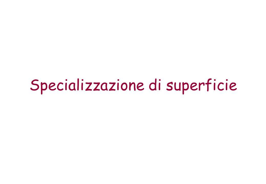 Specializzazione di superficie