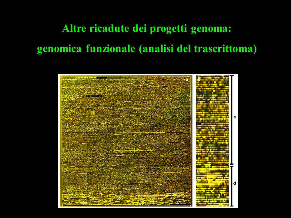 Altre ricadute dei progetti genoma: genomica funzionale (analisi del trascrittoma)