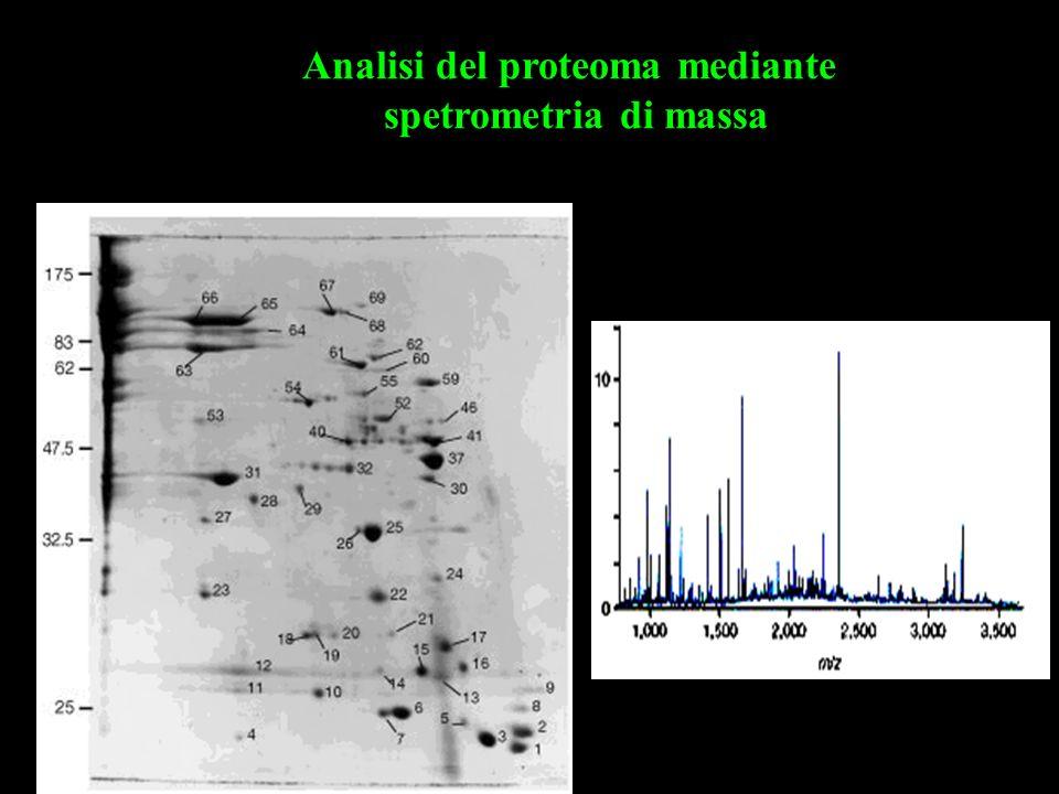 Analisi del proteoma mediante spetrometria di massa