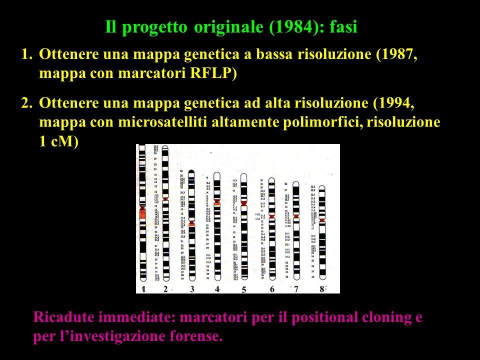 Il progetto originale (1984): fasi 1.Ottenere una mappa genetica a bassa risoluzione (1987, mappa con marcatori RFLP) 2.Ottenere una mappa genetica ad