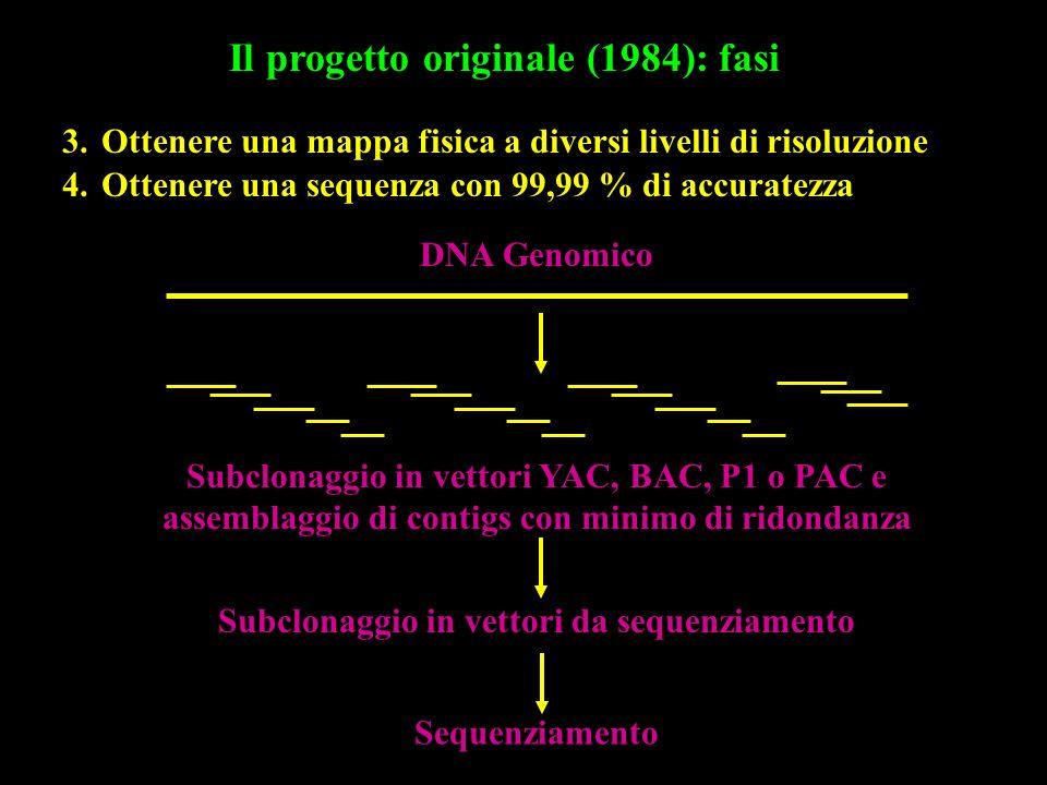Il progetto originale (1984): fasi 3.Ottenere una mappa fisica a diversi livelli di risoluzione DNA Genomico Subclonaggio in vettori YAC, BAC, P1 o PA