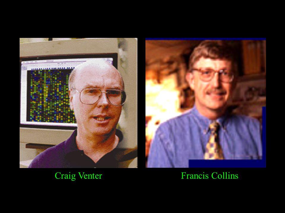 Craig VenterFrancis Collins