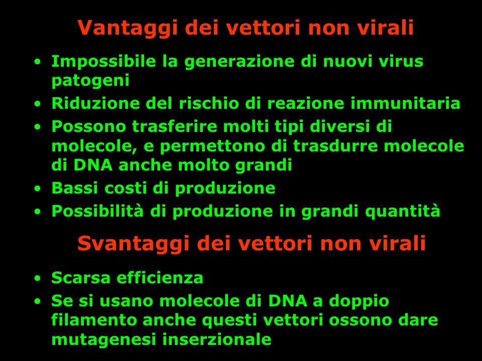 Vantaggi dei vettori non virali Impossibile la generazione di nuovi virus patogeni Riduzione del rischio di reazione immunitaria Possono trasferire mo