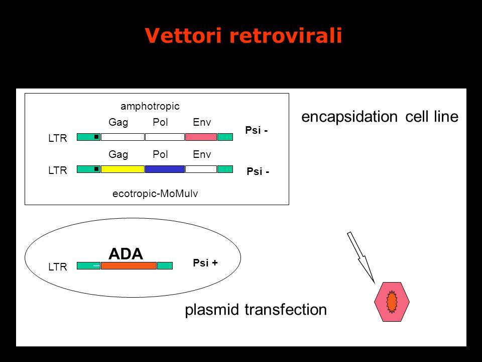 ADA LTR Psi - GagPolEnv LTR GagPolEnv LTR Psi + encapsidation cell line plasmid transfection ecotropic-MoMulv amphotropic Vettori retrovirali
