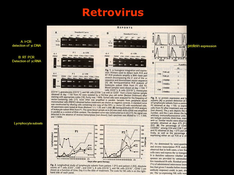 Retrovirus A. PCR: detection of c DNA B: RT PCR Detection of c RNA Lymphocyte subsets protein expression