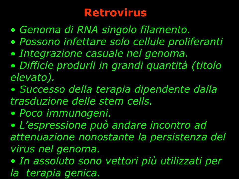 Retrovirus Genoma di RNA singolo filamento. Possono infettare solo cellule proliferanti Integrazione casuale nel genoma. Difficle produrli in grandi q
