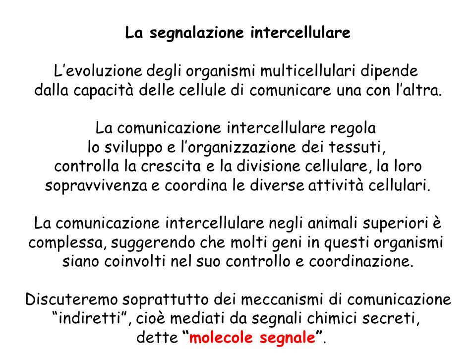 La segnalazione intercellulare Levoluzione degli organismi multicellulari dipende dalla capacità delle cellule di comunicare una con laltra. La comuni