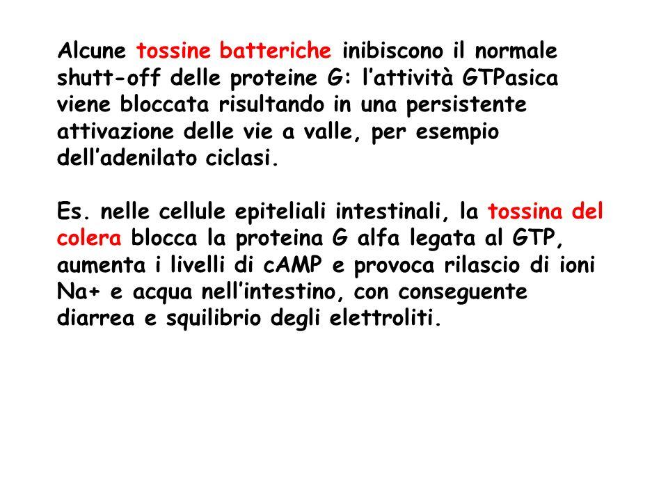 Alcune tossine batteriche inibiscono il normale shutt-off delle proteine G: lattività GTPasica viene bloccata risultando in una persistente attivazione delle vie a valle, per esempio delladenilato ciclasi.
