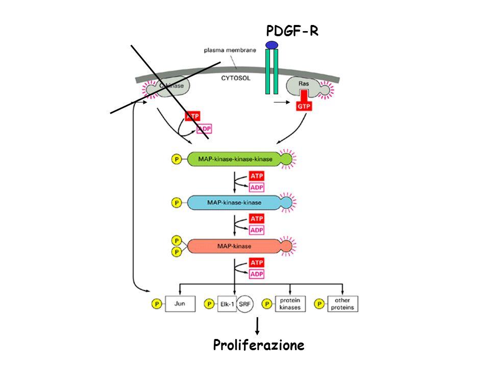 Proliferazione PDGF-R