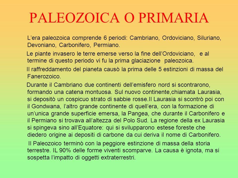 PALEOZOICA O PRIMARIA Lera paleozoica comprende 6 periodi: Cambriano, Ordoviciano, Siluriano, Devoniano, Carbonifero, Permiano. Le piante invasero le
