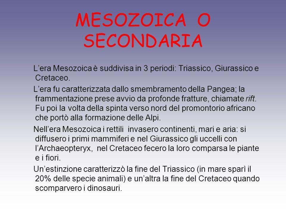 MESOZOICA O SECONDARIA Lera Mesozoica è suddivisa in 3 periodi: Triassico, Giurassico e Cretaceo. Lera fu caratterizzata dallo smembramento della Pang