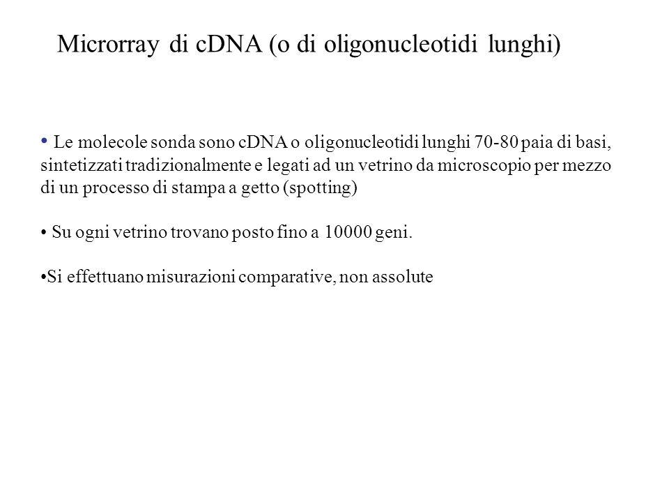 Microrray di cDNA (o di oligonucleotidi lunghi) Le molecole sonda sono cDNA o oligonucleotidi lunghi 70-80 paia di basi, sintetizzati tradizionalmente