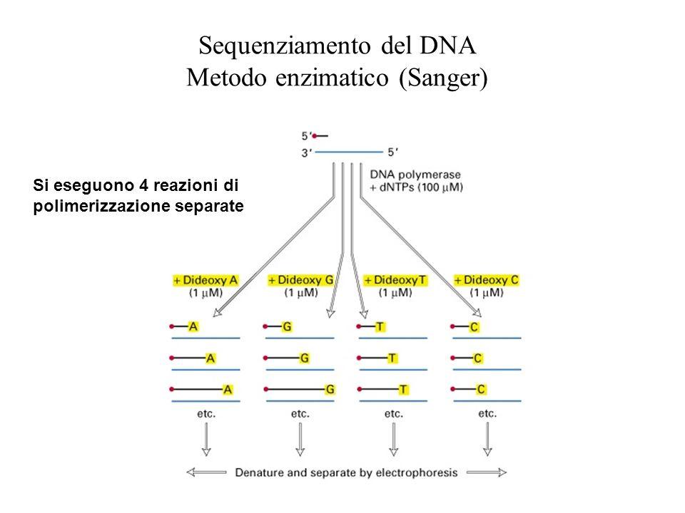 Sequenziamento del DNA Metodo enzimatico (Sanger) Si eseguono 4 reazioni di polimerizzazione separate