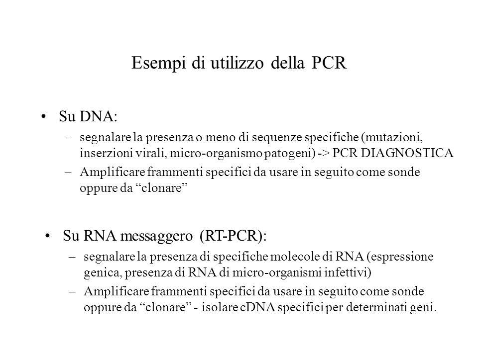 Esempi di utilizzo della PCR Su DNA: –segnalare la presenza o meno di sequenze specifiche (mutazioni, inserzioni virali, micro-organismo patogeni) ->