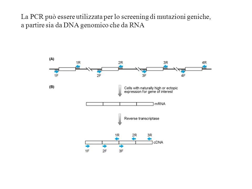 La PCR può essere utilizzata per lo screening di mutazioni geniche, a partire sia da DNA genomico che da RNA