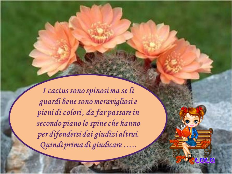 I cactus sono spinosi ma se li guardi bene sono meravigliosi e pieni di colori, da far passare in secondo piano le spine che hanno per difendersi dai