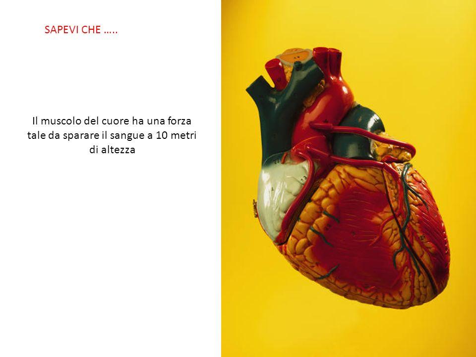SABIAS QUE… Il muscolo del cuore ha una forza tale da sparare il sangue a 10 metri di altezza SAPEVI CHE …..