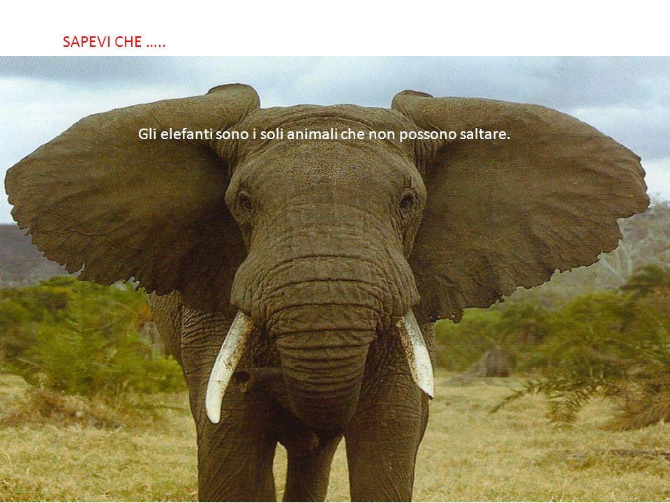 SABIAS QUE… Gli elefanti sono i soli animali che non possono saltare. SAPEVI CHE …..