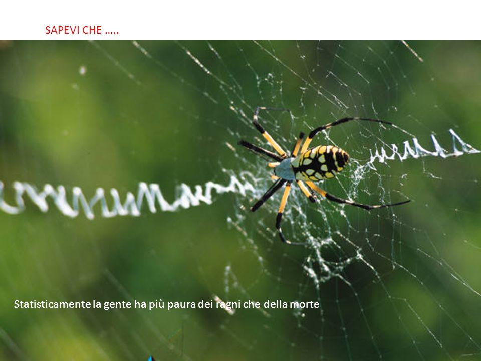 SABIAS QUE… Statisticamente la gente ha più paura dei ragni che della morte SAPEVI CHE …..