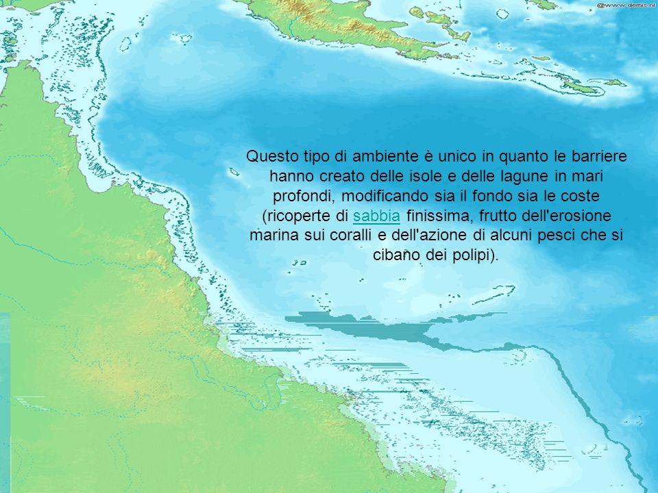 La barriera corallina è una formazione tipica dei mari e oceani tropicali.