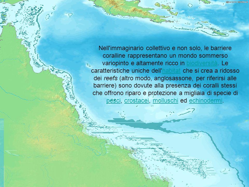 Questo tipo di ambiente è unico in quanto le barriere hanno creato delle isole e delle lagune in mari profondi, modificando sia il fondo sia le coste