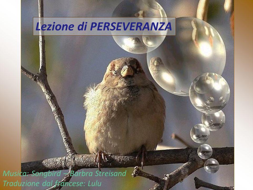Lezione di PERSEVERANZA Musica: Songbird – Barbra Streisand Traduzione dal francese: Lulu