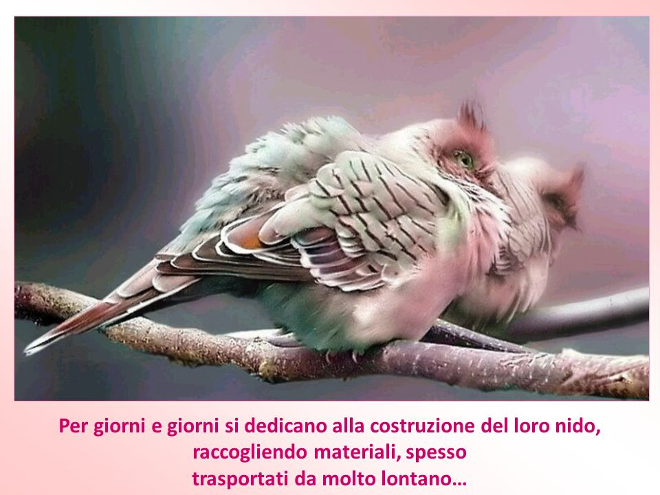 Hai già osservato lattitudine degli uccelli davanti alle avversità?