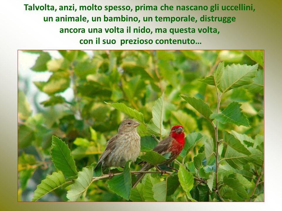 Talvolta, anzi, molto spesso, prima che nascano gli uccellini, un animale, un bambino, un temporale, distrugge ancora una volta il nido, ma questa volta, con il suo prezioso contenuto…