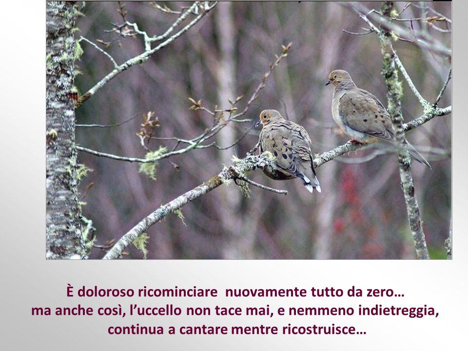 Talvolta, anzi, molto spesso, prima che nascano gli uccellini, un animale, un bambino, un temporale, distrugge ancora una volta il nido, ma questa vol