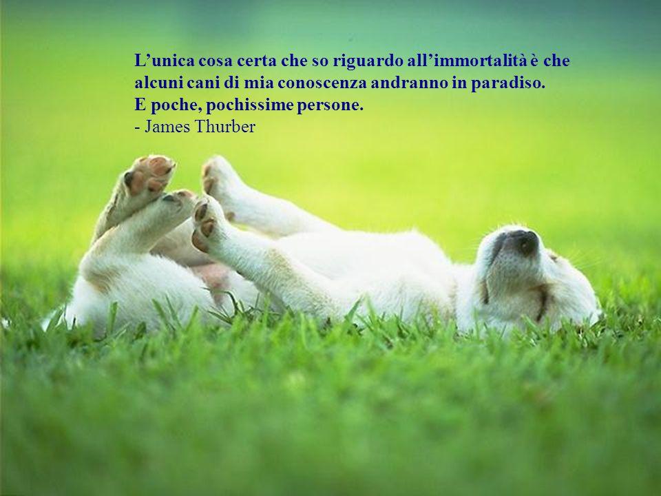 Chiunque non conosca il sapore dello shampoo non ha mai fatto il bagno ad un cane. - Franklin P. Jones