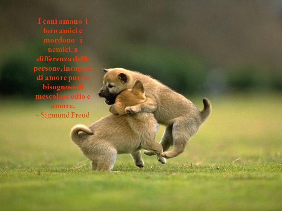 Il mio obiettivo nella vita e di essere una persona cosi splendida come il mio cane gia pensa che io sia.