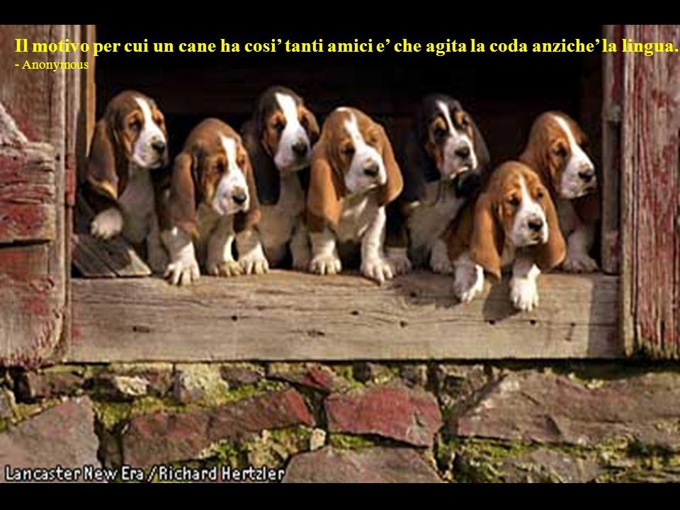 I cani non sono tutto nella vita, ma rendono la vita piena. - Roger Caras