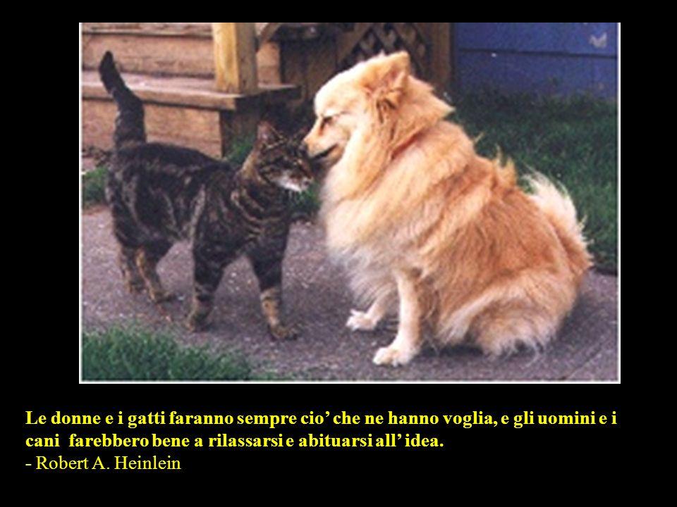 Il motivo per cui un cane ha cosi tanti amici e che agita la coda anziche la lingua. - Anonymous