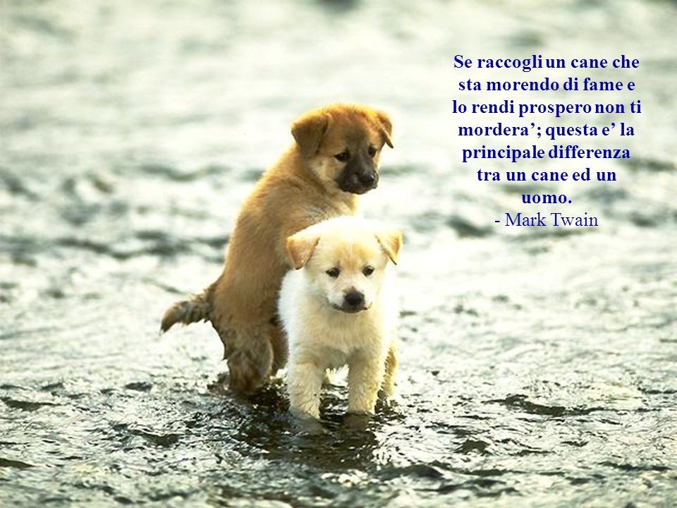 Mediamente un cane e una persona migliore rispetto alla persona media. - Andy Rooney