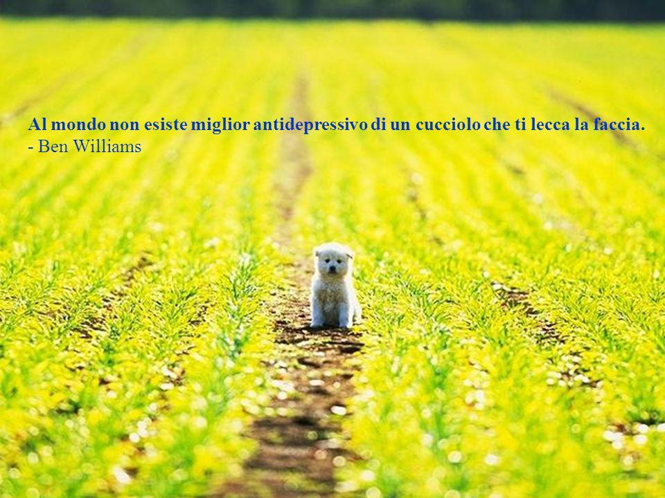 Se raccogli un cane che sta morendo di fame e lo rendi prospero non ti mordera; questa e la principale differenza tra un cane ed un uomo. - Mark Twain