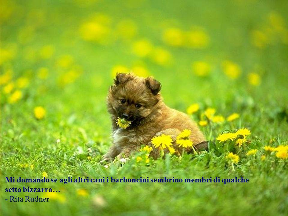 Non prendere lammirazione del tuo cane come prova inconfutabile del fatto che sei fantastico. - Ann Landers