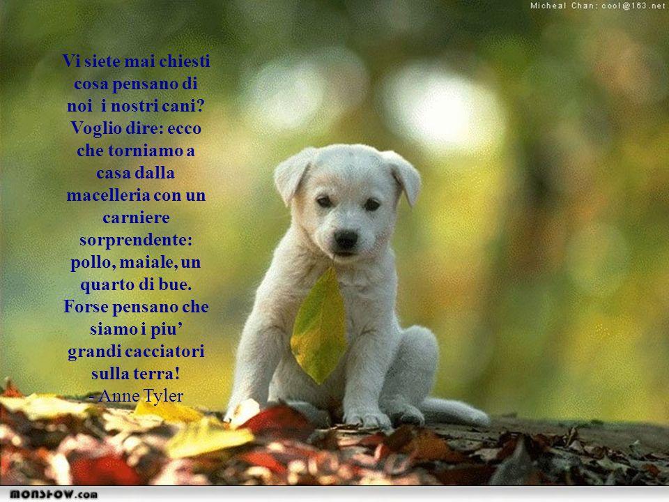 Mi domando se agli altri cani i barboncini sembrino membri di qualche setta bizzarra… - Rita Rudner