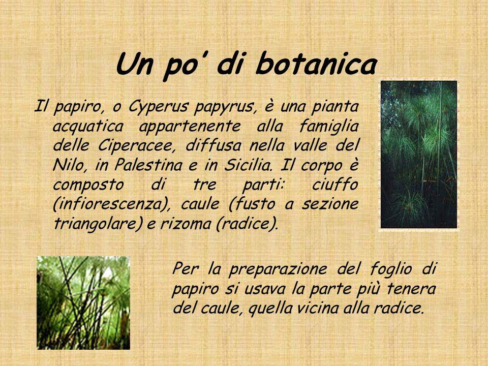 Un po di botanica Il papiro, o Cyperus papyrus, è una pianta acquatica appartenente alla famiglia delle Ciperacee, diffusa nella valle del Nilo, in Pa