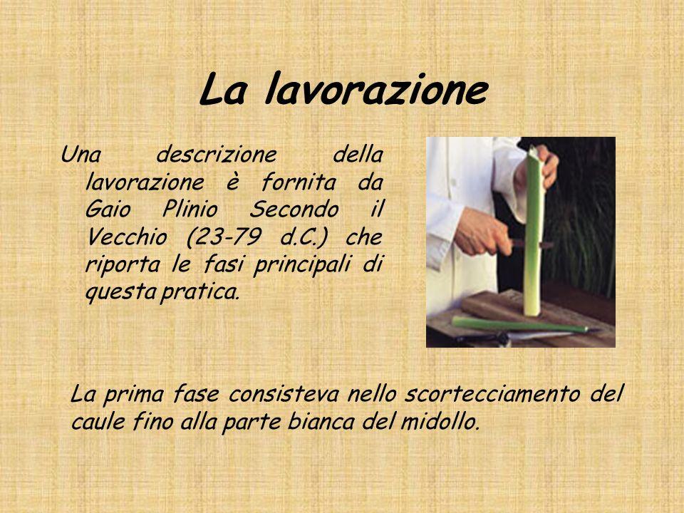 La lavorazione Una descrizione della lavorazione è fornita da Gaio Plinio Secondo il Vecchio (23-79 d.C.) che riporta le fasi principali di questa pratica.