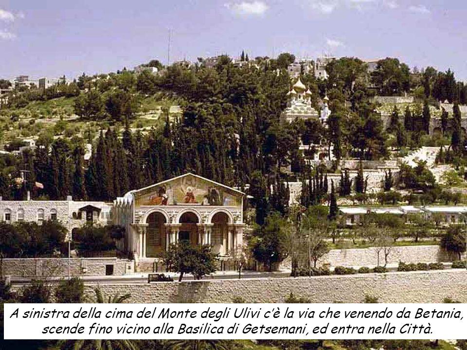A sinistra della cima del Monte degli Ulivi cè la via che venendo da Betania, scende fino vicino alla Basilica di Getsemani, ed entra nella Città.