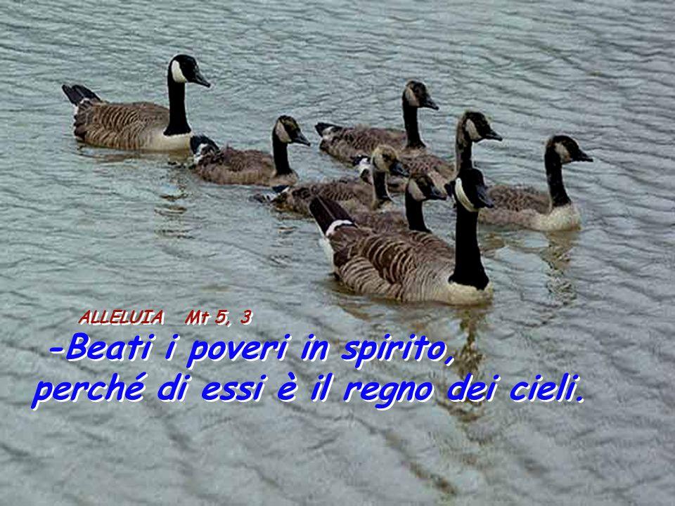 ALLELUIA Mt 5, 3 -Beati i poveri in spirito, perché di essi è il regno dei cieli.