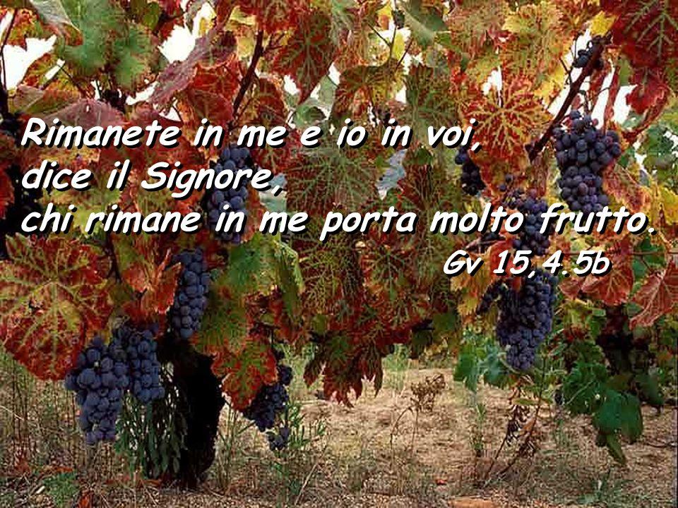 Rimanete in me e io in voi, dice il Signore, chi rimane in me porta molto frutto.