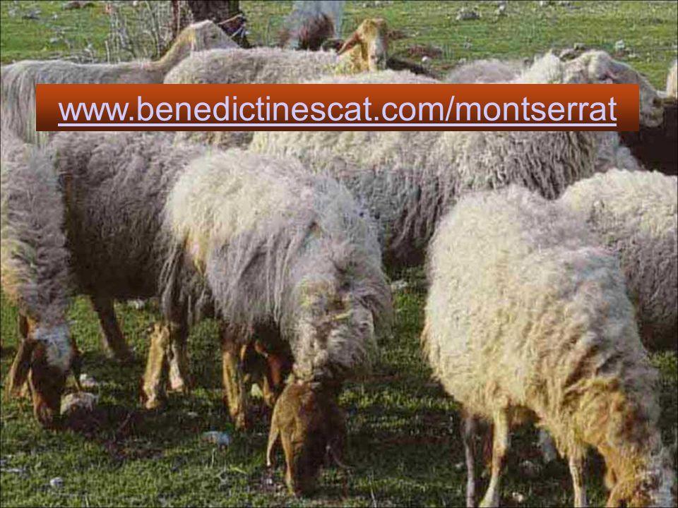 Buon Pastore, che curi tutte le pecore, comprese quelle che vivono nelle intemperie, fa che anche noi abbiamo per loro una attenzione speciale