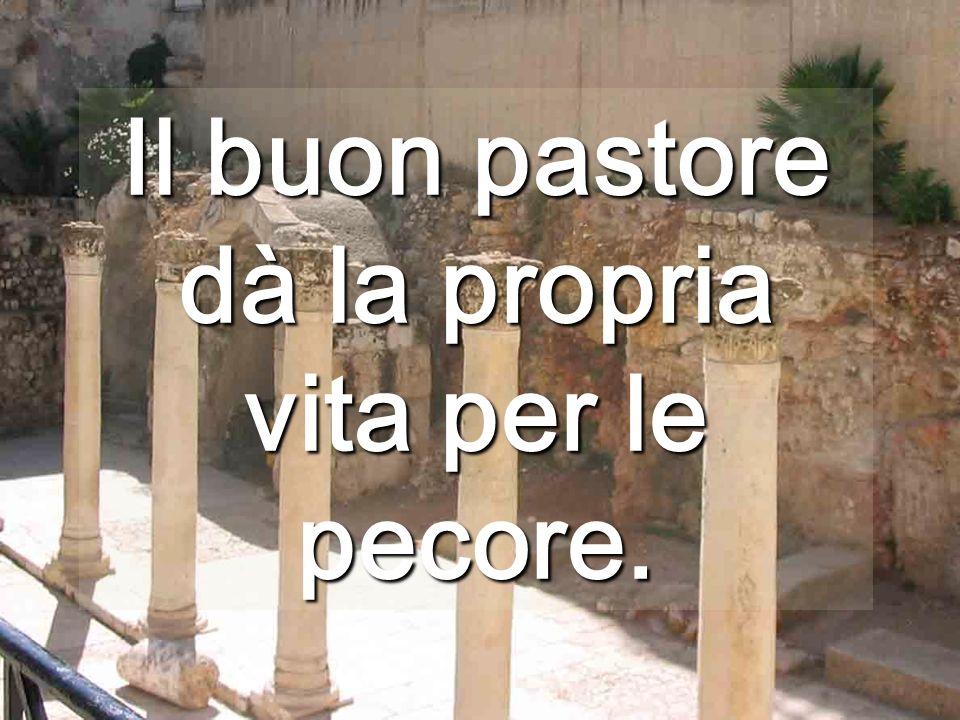 Il Pastore Buono è al servizio di tutte le pecore, anche se povere o malate...