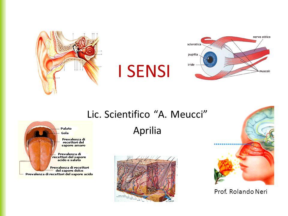 I SENSI Lic. Scientifico A. Meucci Aprilia Prof. Rolando Neri